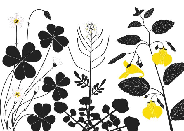 las semillas de arce giran. Existen Violetas que saltan en nenúfares nadadores